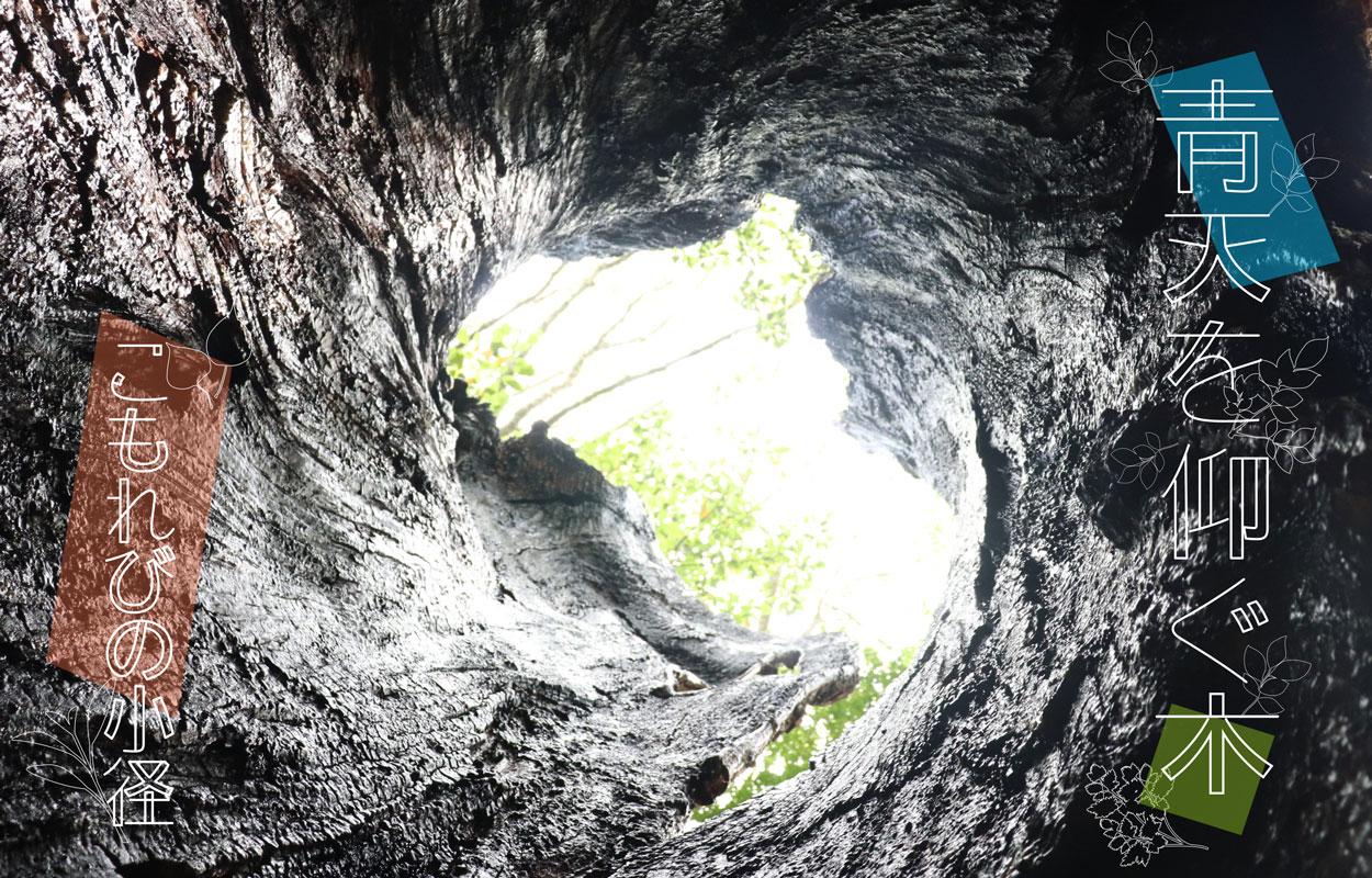 青天を仰ぐ木